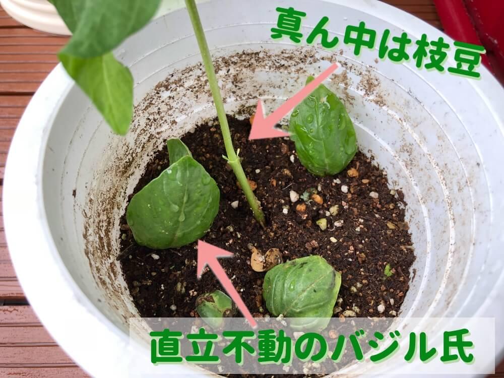 真ん中には枝豆