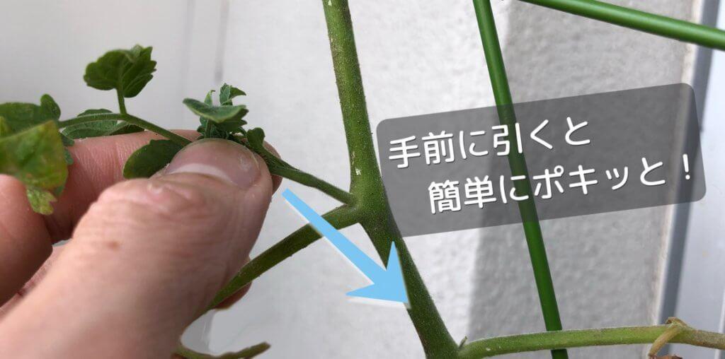 芽かきの方法