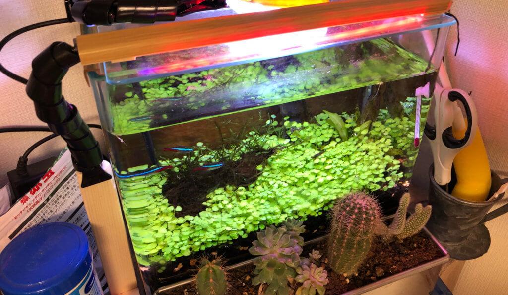 サボテンと水草共通のLEDプラントライトとして運用してみます